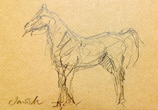 Heather Jansch, Arabian Standing 2014, Ink on Acid Free Paper