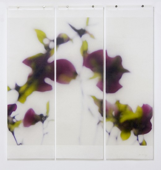 Jeri Eisenberg, Dark Magnolia, 2/12 Archival Pigment Ink on Kozo Paper Infused with Encaustic Medium