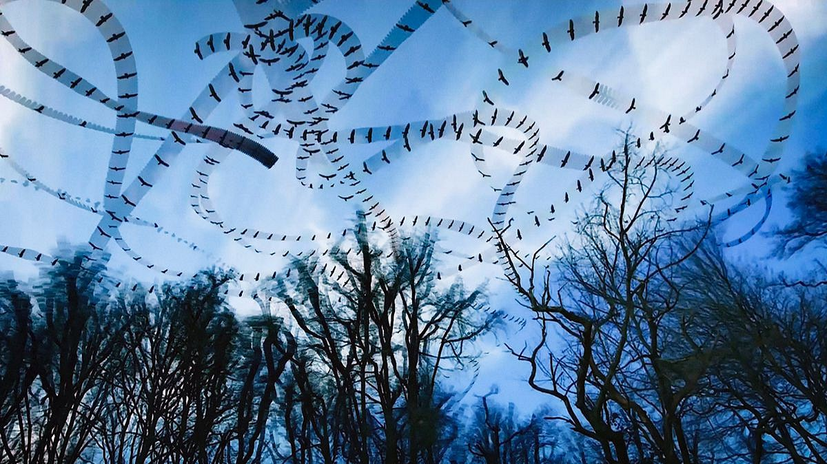 Dennis Hlynsky, Black Buzzards (Still) Photograph, Archival Paper with Pigment Ink